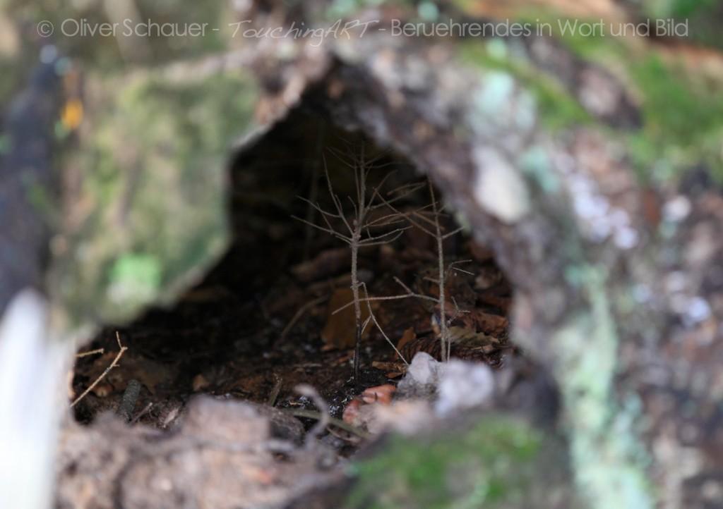 Sipapu - Eingang in die Unterwelt