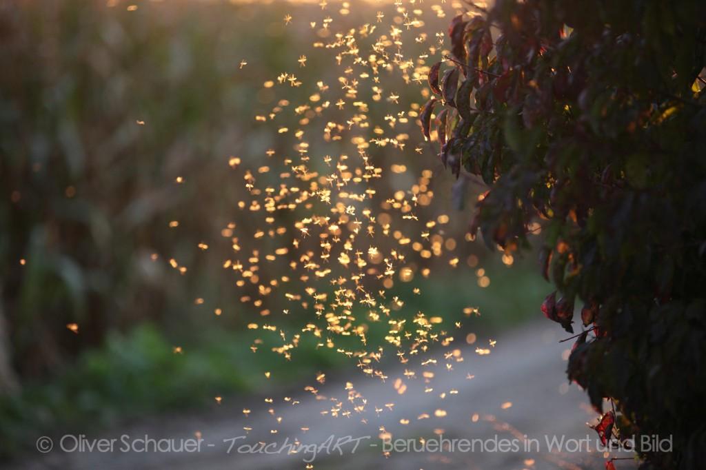 Mücken im Sonnenlicht