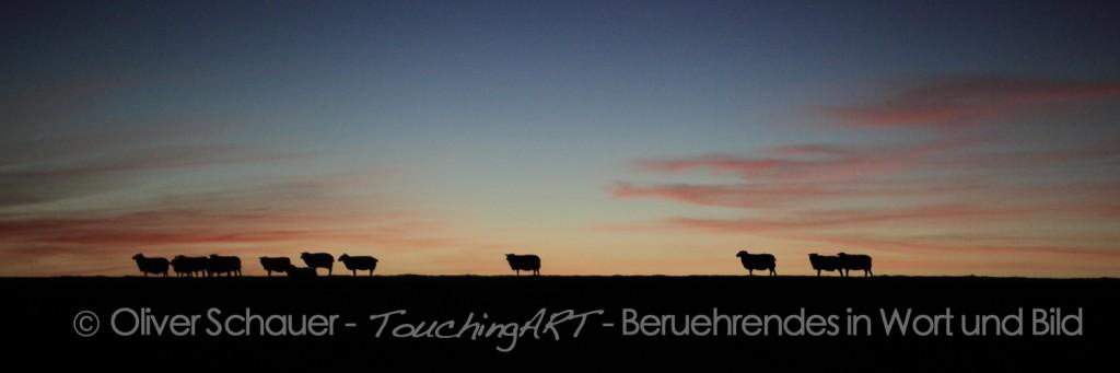 Schafe am Abend
