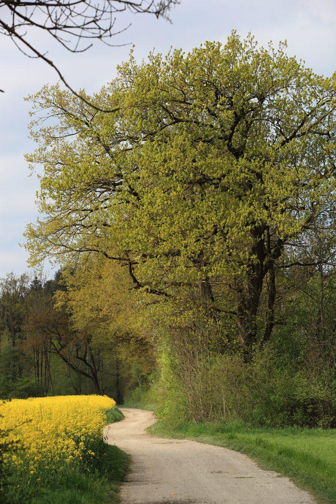 Der Weg durchs Moos
